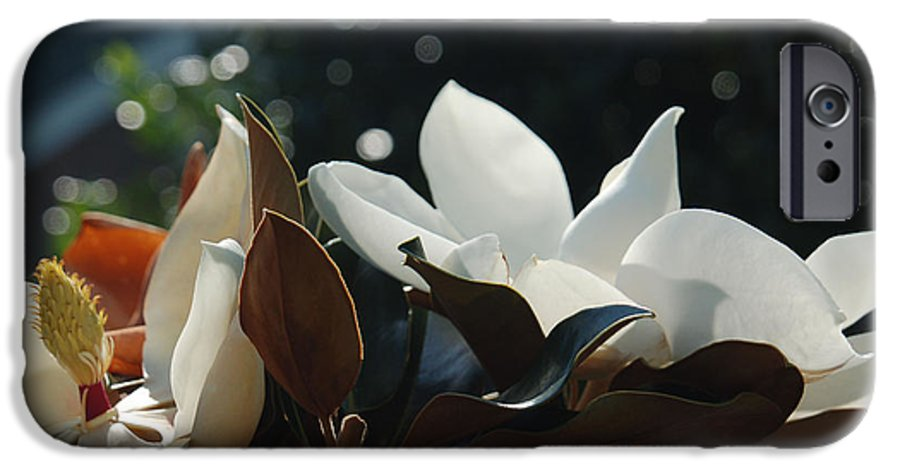 Magnolia IPhone 6 Case featuring the photograph A Sea Of Magnolias by Suzanne Gaff
