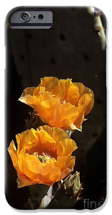 Cactus IPhone 6 Case featuring the photograph Apricot Blossoms by Kathy McClure
