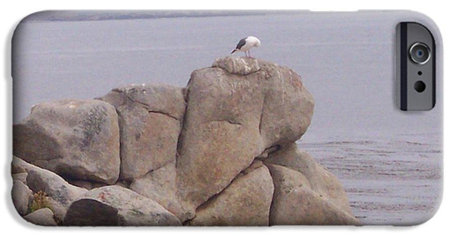 Bird IPhone 6 Case featuring the photograph Bird On A Rock by Pharris Art