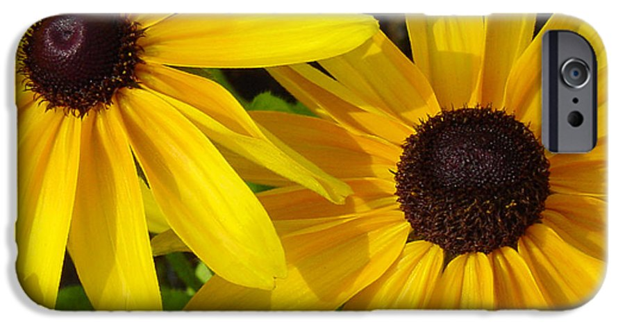 Black Eyed Susan IPhone 6 Case featuring the photograph Black-eyed Susans Close Up by Suzanne Gaff