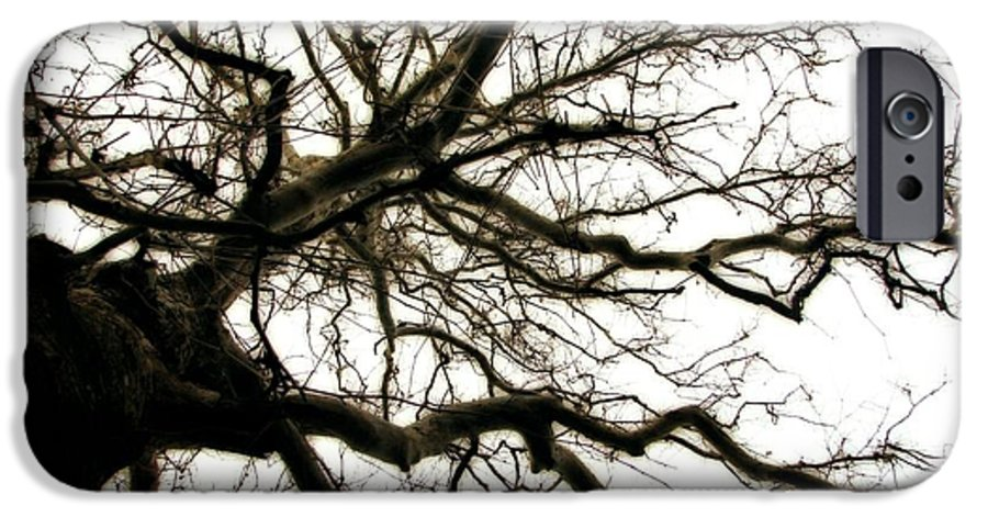 Branches IPhone 6 Case featuring the photograph Branches by Michelle Calkins