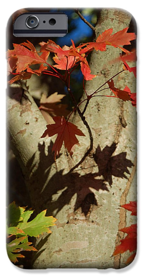 Autumn IPhone 6 Case featuring the photograph Carolina Autumn by Suzanne Gaff