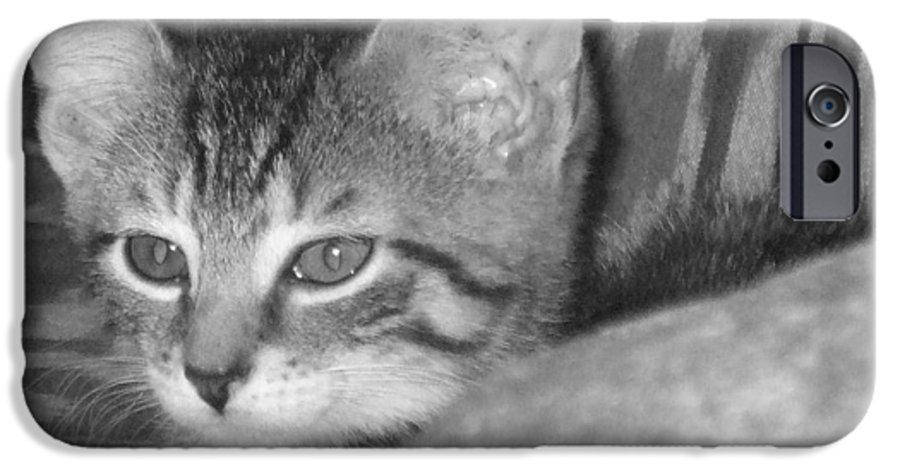Kitten IPhone 6 Case featuring the photograph Comfy Kitten by Pharris Art