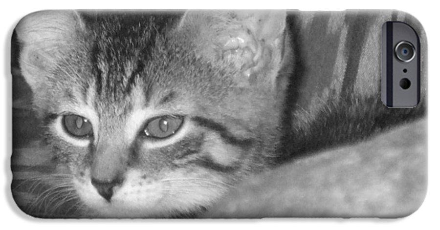 Kitten IPhone 6 Case featuring the photograph Comfy Kitten by Pharris Art