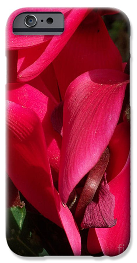 Flowers IPhone 6 Case featuring the photograph Cyclamen by Kathy McClure