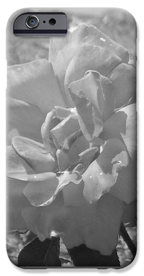 Rose IPhone 6 Case featuring the photograph Dew Rose by Pharris Art
