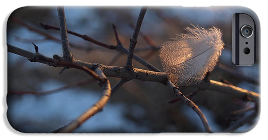Branch IPhone 6 Case featuring the photograph Downy Feather Backlit On Wintry Branch At Twilight by Anna Lisa Yoder
