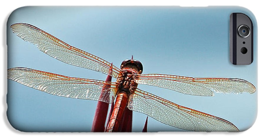 Dragonfly IPhone 6 Case featuring the photograph Dragonfly Days by Suzanne Gaff