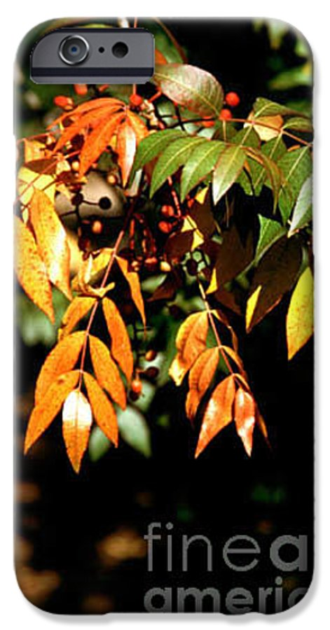 Fall Color IPhone 6 Case featuring the photograph Fall Leaves by Kathy McClure