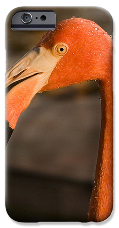 3scape IPhone 6 Case featuring the photograph Flamingo by Adam Romanowicz