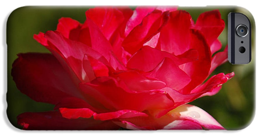Floral IPhone 6 Case featuring the photograph Fuchsia by Suzanne Gaff