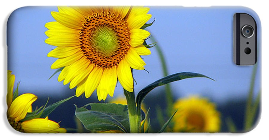 Sunflower IPhone 6 Case featuring the photograph Getting To The Sun by Amanda Barcon