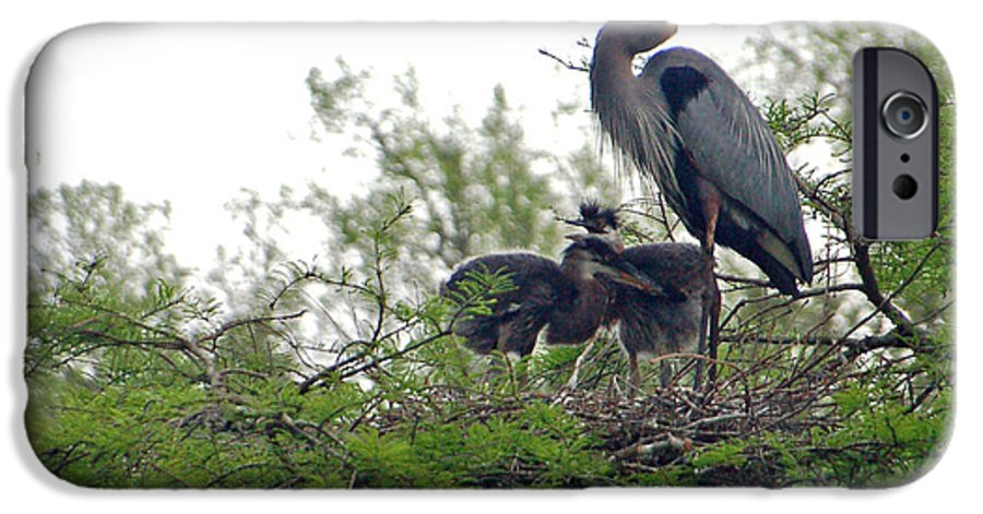 Great Blue Heron IPhone 6 Case featuring the photograph Great Blue Heron With Fledglings by Suzanne Gaff