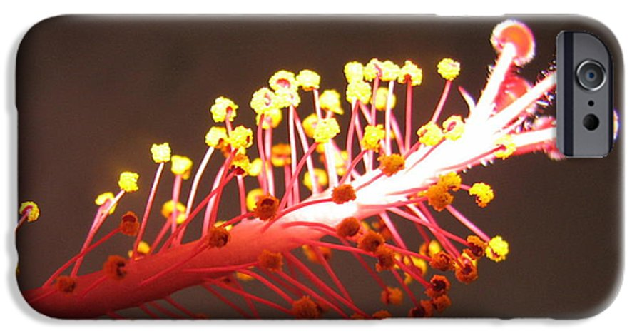 Hibiscus IPhone 6 Case featuring the photograph Hibiscus by Mary Ellen Mueller Legault