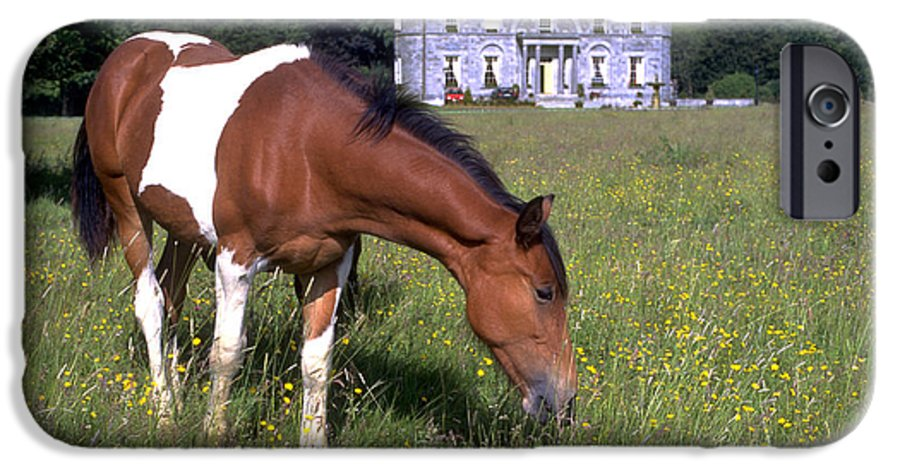 Horse IPhone 6 Case featuring the photograph Horse Grazes Near St. Clerans by Carl Purcell