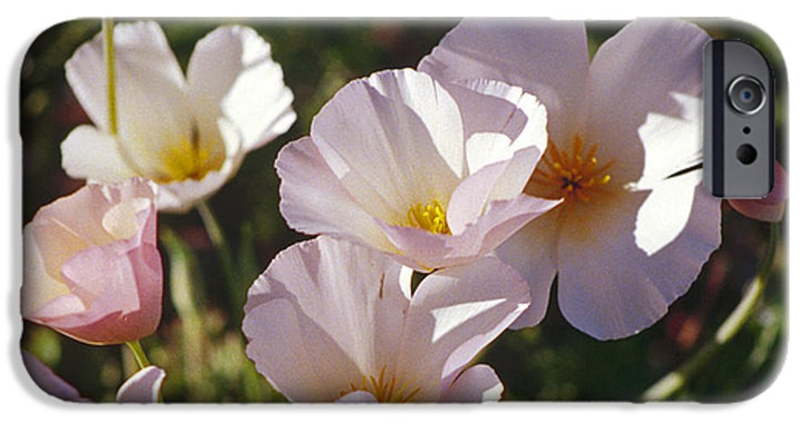 Flowers IPhone 6 Case featuring the photograph Icelandic Poppies by Kathy McClure