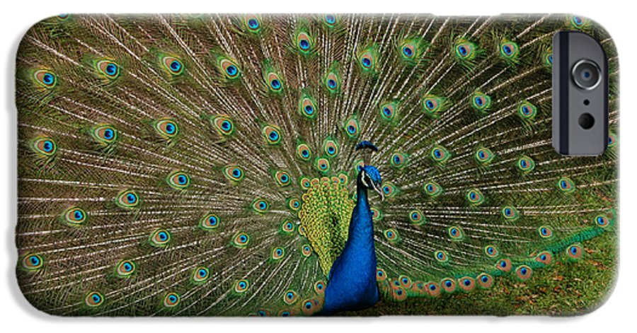 Peacock IPhone 6 Case featuring the photograph Its All About Him by Suzanne Gaff