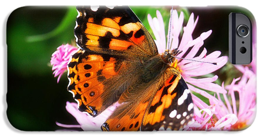 Flower IPhone 6 Case featuring the photograph Late Summer Painted Lady by Marilyn Hunt