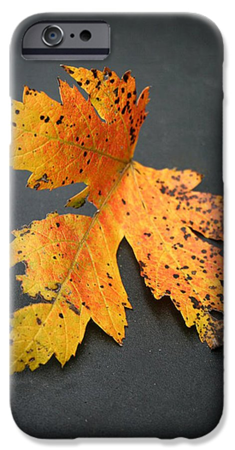 Nature IPhone 6 Case featuring the photograph Leaf Portrait by Linda Sannuti