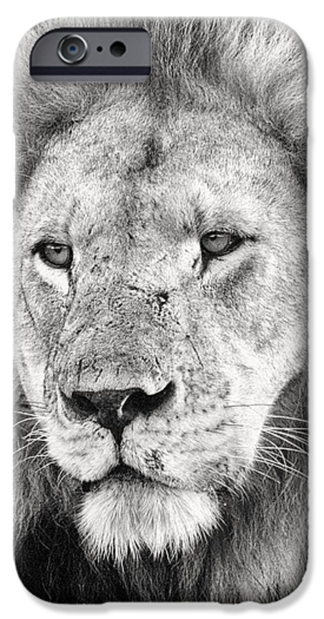3scape Photos IPhone 6 Case featuring the photograph Lion King by Adam Romanowicz