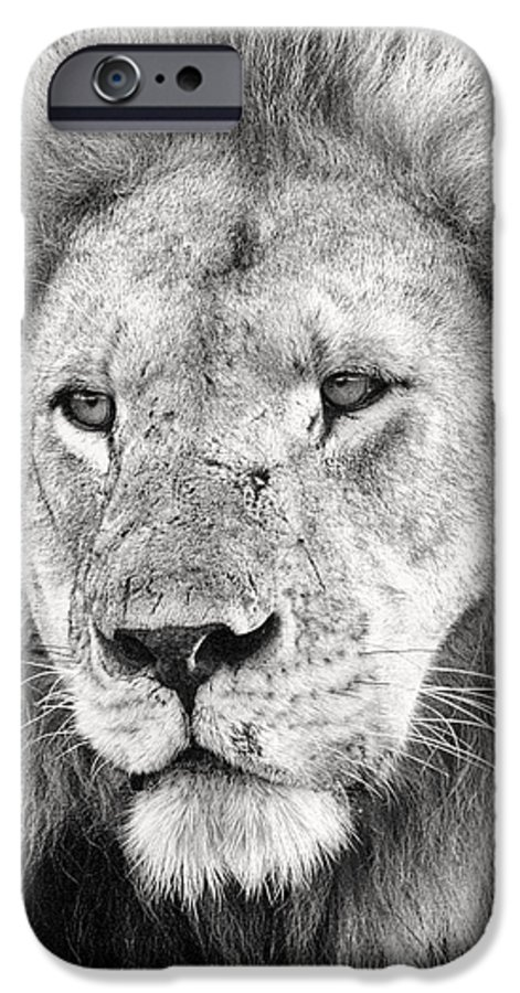 3scape IPhone 6 Case featuring the photograph Lion King by Adam Romanowicz