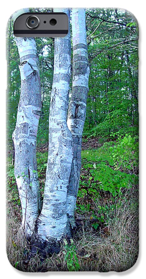 Birch Tree IPhone 6 Case featuring the photograph Lone Birch In The Maine Woods by Suzanne Gaff