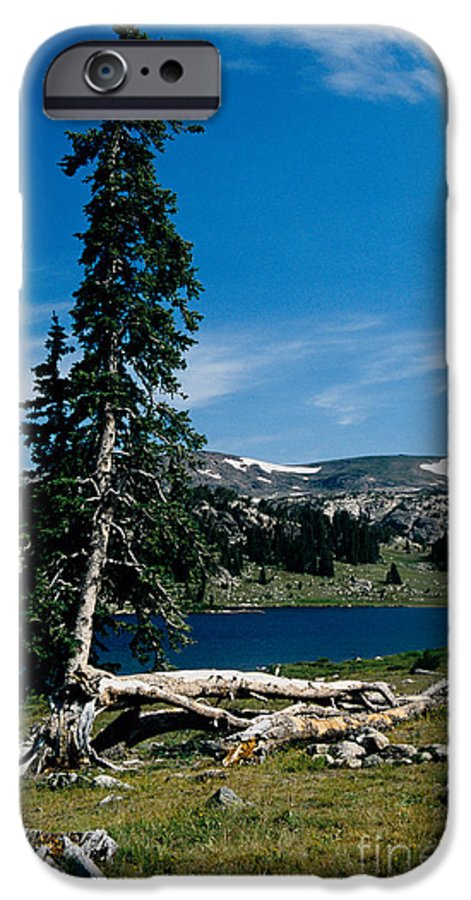 Mountains IPhone 6 Case featuring the photograph Lone Tree At Pass by Kathy McClure