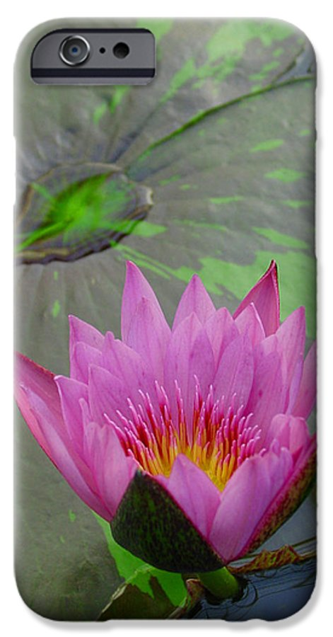 Lotus IPhone 6 Case featuring the photograph Lotus Blossom by Suzanne Gaff