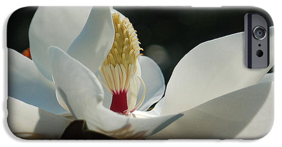 Magnolia IPhone 6 Case featuring the photograph Magnolia Tiny Gem by Suzanne Gaff