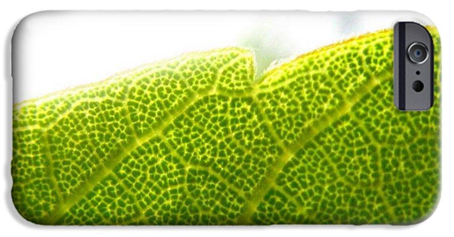 Leaf IPhone 6 Case featuring the photograph Micro Leaf by Rhonda Barrett