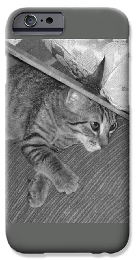 Kitten IPhone 6 Case featuring the photograph Model Kitten by Pharris Art