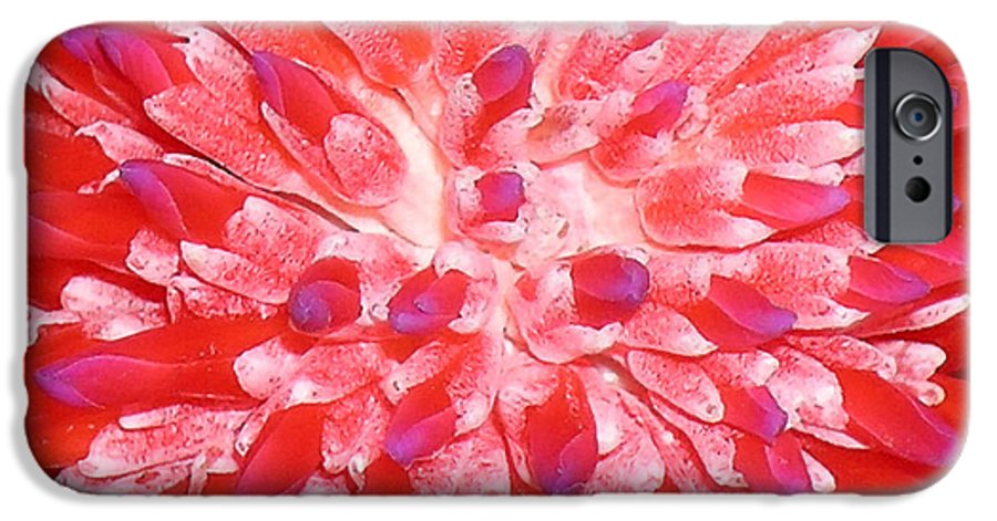 Hawaii Iphone Cases IPhone 6 Case featuring the photograph Molokai Bromeliad by James Temple