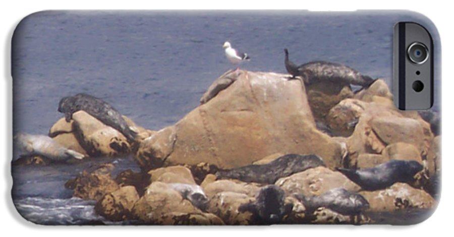 Seal IPhone 6 Case featuring the photograph Monterey Sun Bath by Pharris Art