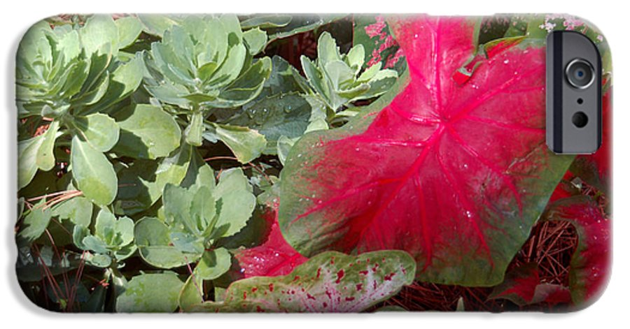 Caladium IPhone 6 Case featuring the photograph Morning Rain by Suzanne Gaff