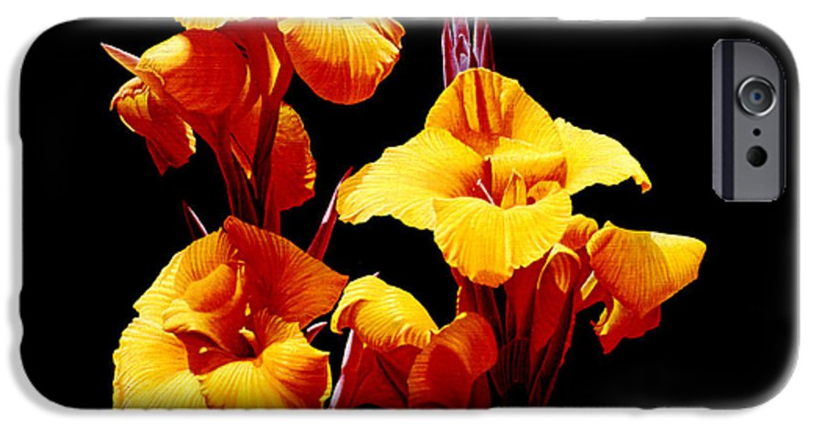 Yellow Cannas IPhone 6 Case featuring the painting Orange Cannas by Gary Hernandez