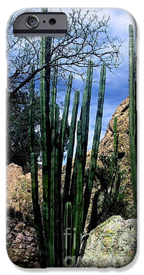 Cactus IPhone 6 Case featuring the photograph Organ Pipe by Kathy McClure