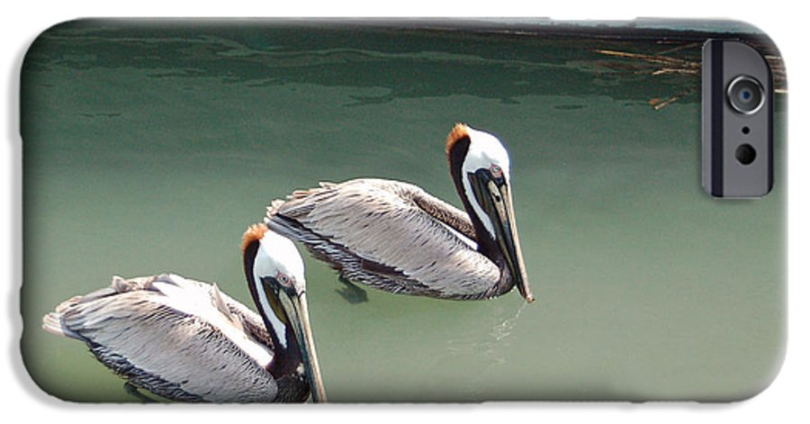 Brown Pelican IPhone 6 Case featuring the photograph Pelicans Partners by Suzanne Gaff