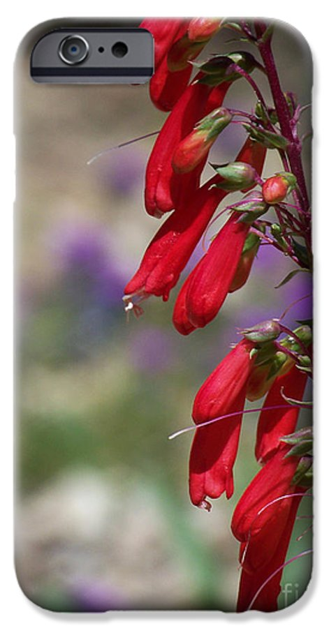 Flowers IPhone 6 Case featuring the photograph Penstemon by Kathy McClure