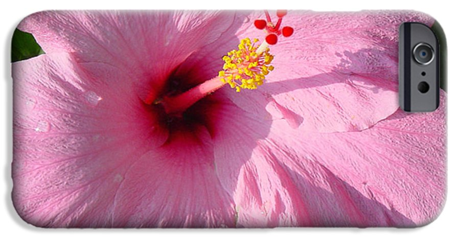 Pink Hibiscus IPhone 6 Case featuring the photograph Pink Hibiscus by Suzanne Gaff