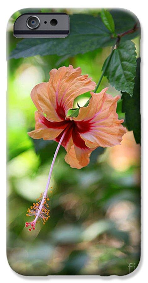 Pink Or Red Hibiscus Sorrel Or Flor De Jamaica Flower Iphone 6 Case