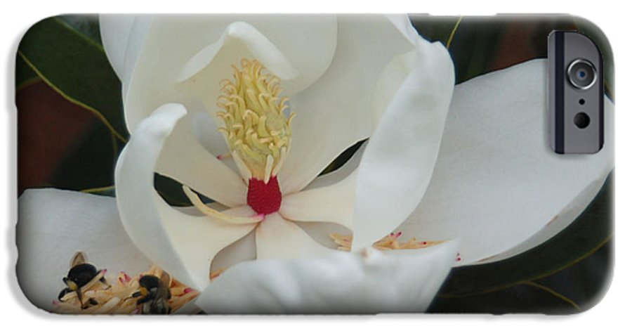 Flower IPhone 6 Case featuring the photograph Pollen Party by Suzanne Gaff
