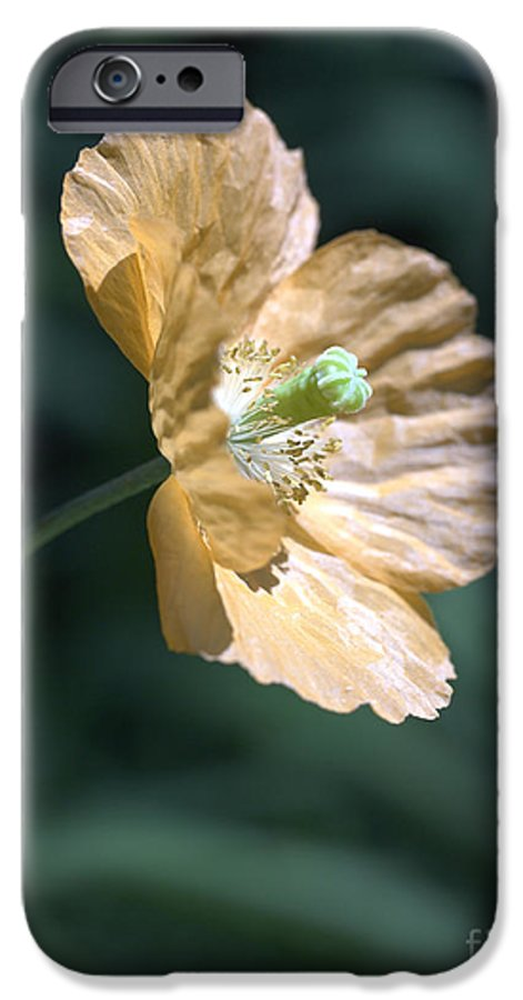 Poppy Orange IPhone 6 Case featuring the photograph Poppy by Tony Cordoza