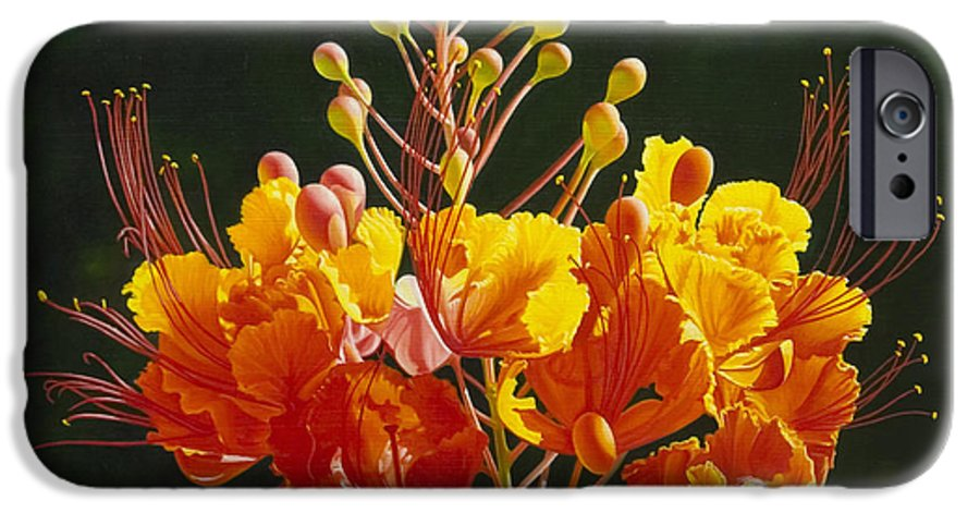 Floral IPhone 6 Case featuring the painting Pride Of Barbados by Gary Hernandez