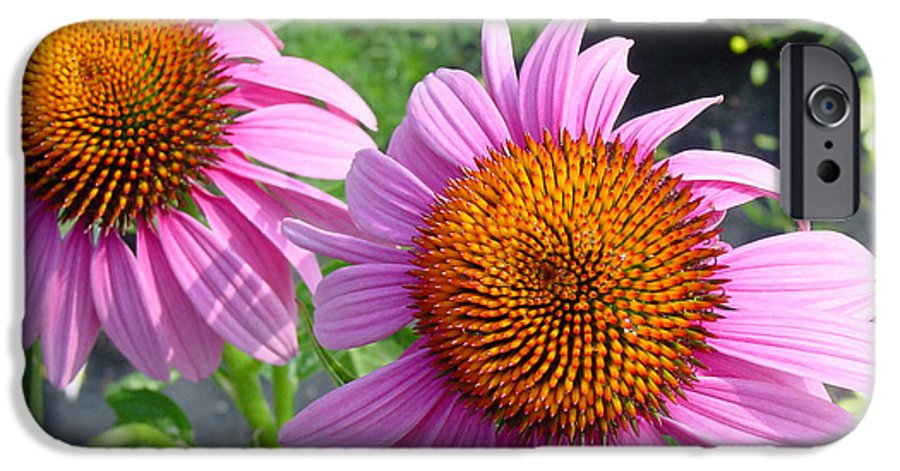 Flower IPhone 6 Case featuring the photograph Purple Coneflowers by Suzanne Gaff