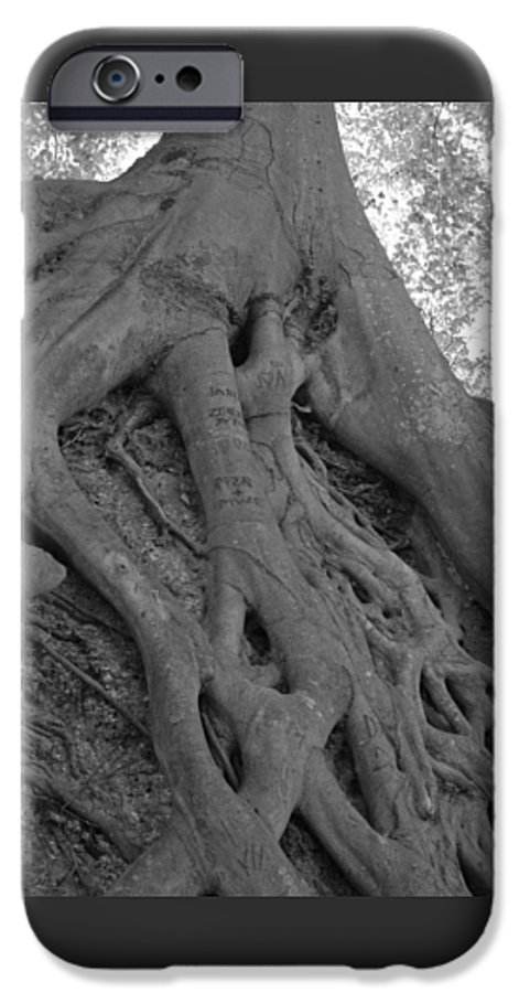 Tree IPhone 6 Case featuring the photograph Roots II by Suzanne Gaff