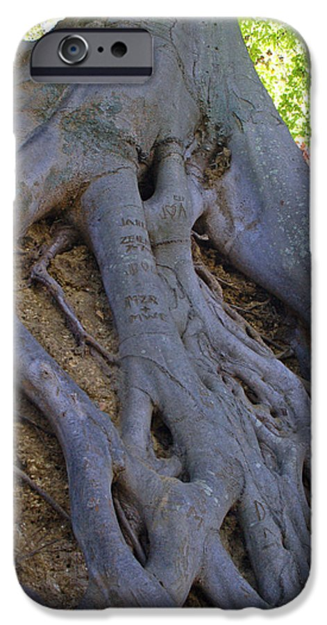 Tree IPhone 6 Case featuring the photograph Roots by Suzanne Gaff