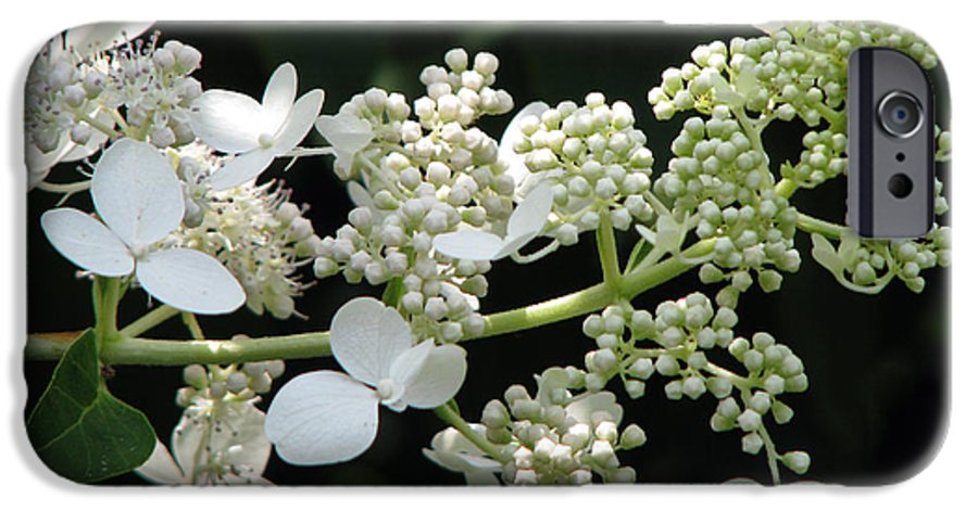Hydrangea IPhone 6 Case featuring the photograph Simply by Amanda Barcon
