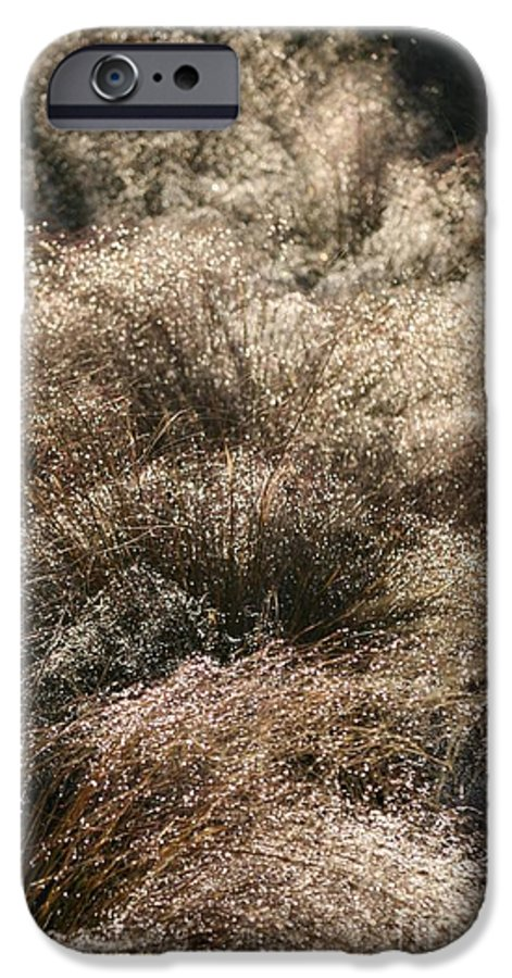 Grasses IPhone 6 Case featuring the photograph Sparkling Grasses by Nadine Rippelmeyer