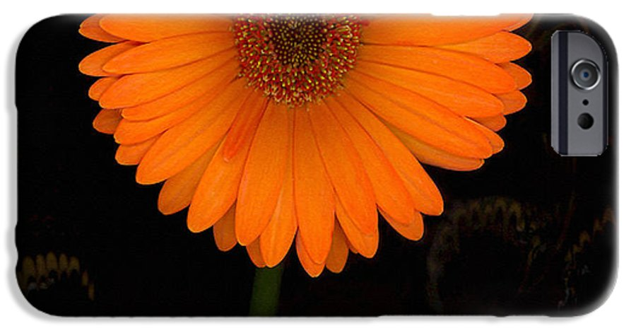 Gerbera Daisy IPhone 6 Case featuring the photograph Standing Tall by Suzanne Gaff