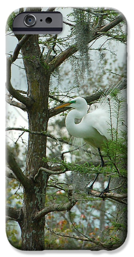 Egret IPhone 6 Case featuring the photograph The Mating Dance by Suzanne Gaff